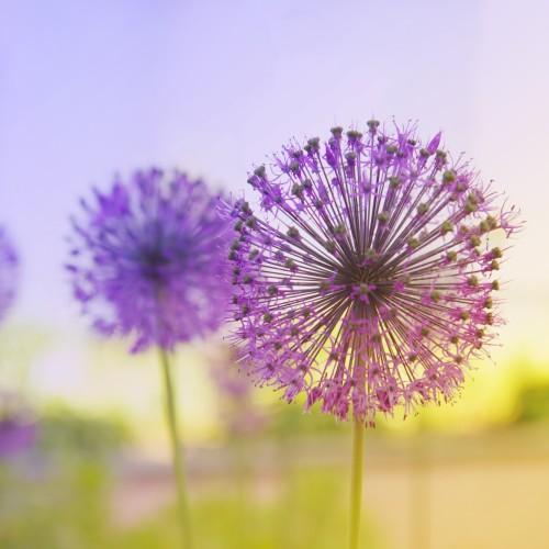 pure-garden-2