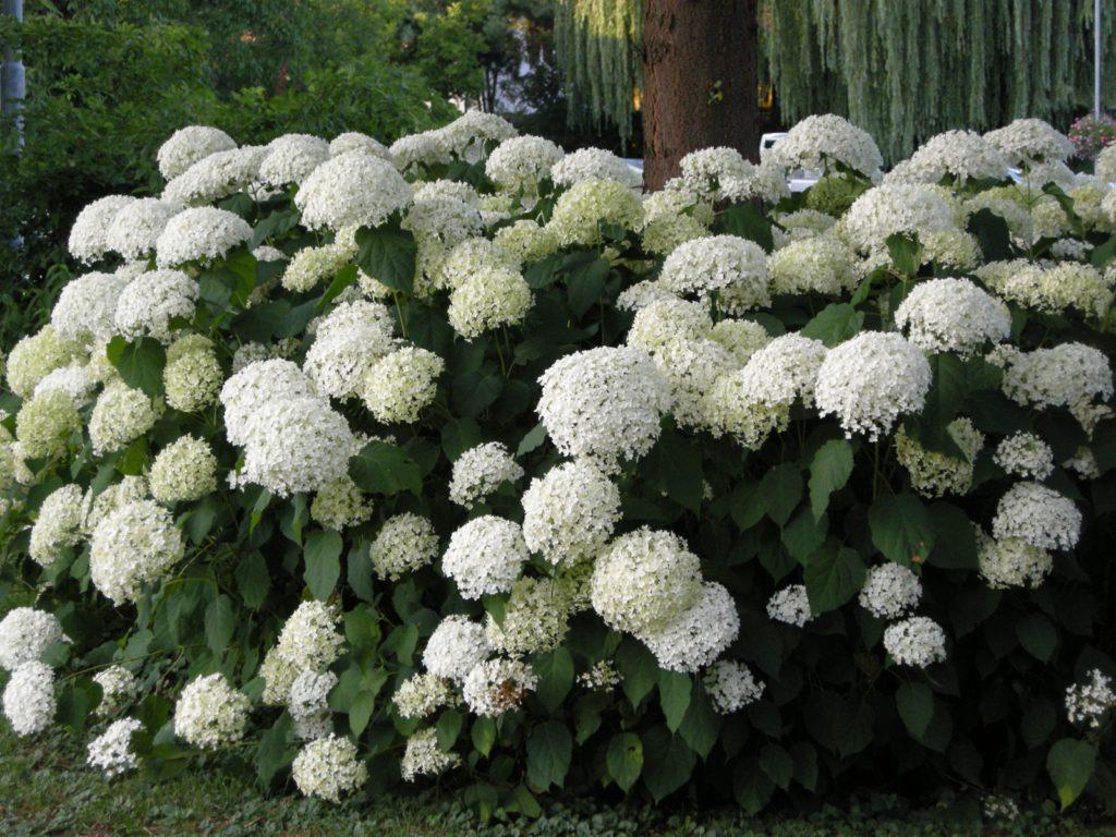 Weißer Garten weiße garten garden at
